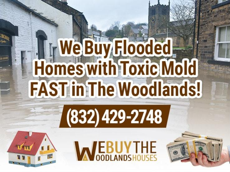 the woodlands water damage and mold